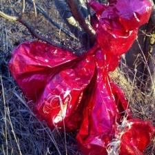 mylar balloon bouquet found caught near a stream