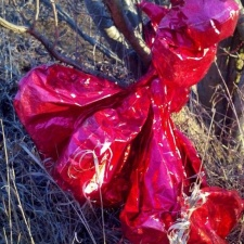mylar balloon bouquet found caught near a stream