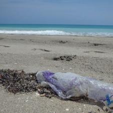 mylar balloon polluting beach