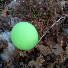 latex balloon polluting autum leaves