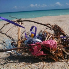 latex balloons and ribbon tangled in sargassum