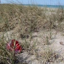 mylar balloon littering dunes