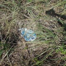mylar balloon embedded in sea grass