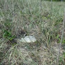 mylar balloon in grass