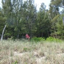 mylar balloon in woods near seashore