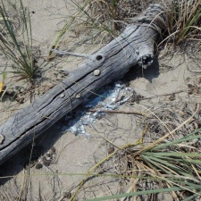 mylar balloon under driftwood on beach