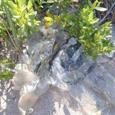 mylar balloons polluting mangrove