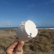 nibbled styrofoam cup found on beach