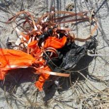 latex balloons littering beach