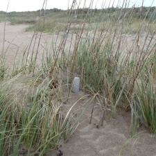 plastic water bottle tucked in with the sea oats