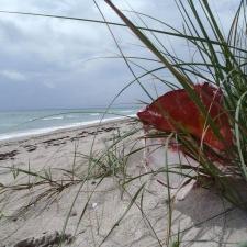 mylar balloon caught in the dunes