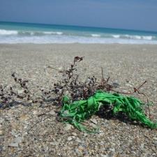 shredded latex balloon polluting beach