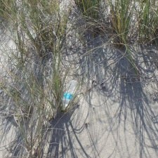 single-use plastic water bottle littering seagrass