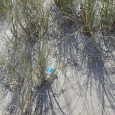 single-use plastic water bottle littering seagrass
