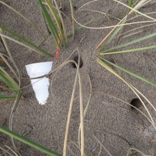 styrofoam cup buried at Ghost Crab's hole