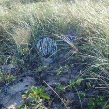 mylar balloon polluting seagrass
