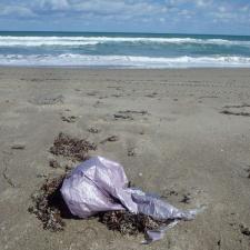 mylar balloon polluting seashore